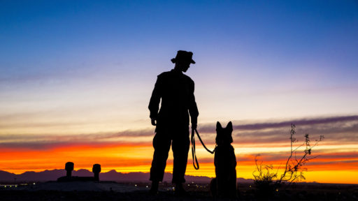 Man with his dog admiring the sunset